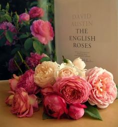 David Austin roses are what dreams are made of.