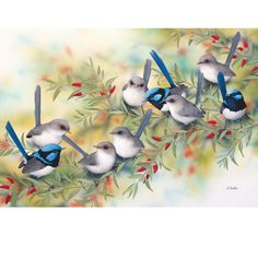 Superb Blue Wrens On Swan River Pea – Art Publishing Australia Australian Animals, Australian Art, Butterfly Drawing, Bird Illustration, Watercolor Bird, Exotic Birds, Bird Prints, Bird Art, Beautiful Birds