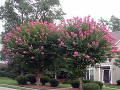 What Should I Prune Now? Grumpy Cuts to the Chase | Southern ...