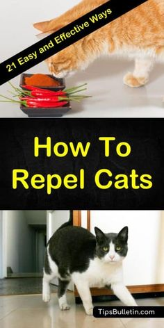 Discover 21 easy ways to repel cats and keep them from using your flower beds as their litter box. Cat Repellant Outdoor, Cat Deterrent Spray, Plants That Repel Cats, Keep Cats Away, Dog Spaces, Feral Cats, Litter Box, Flower Beds, Cat Love