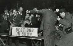 Retro Dogs: A Visual History Of The Westminster Kennel Club Dog Show.