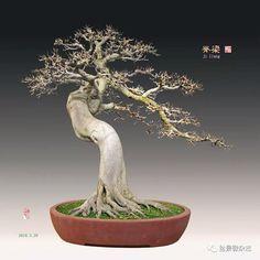 Bonsai Ficus, Bonsai Pruning, Bonsai Art, Planter Pots, Bonsai Styles, Christmas Ornaments, Holiday Decor, Inspiration, Ficus