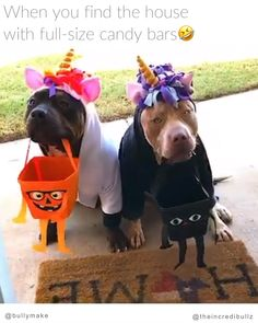 Sneaky Pitbulls in Halloween Costumes : Funny Dogs Funny Animal Memes, Funny Animal Videos, Cute Funny Animals, Dog Memes, Funny Animal Pictures, Cute Baby Animals, Funny Dogs, Animals And Pets, Cute Puppies