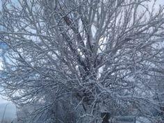 Bonitas ramas