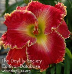 Daylily Heartfelt Challenge