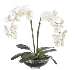 Natural Decorations, Inc. - Orchid Phalaenopsis White Glass Bowl