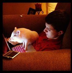 Smart mini pig.