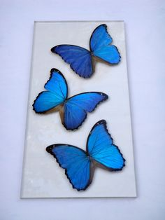 """This art piece uses 3 real beautiful blue morpho butterflies that are preserved and permanently adhered to a 3/8"""" thick acrylic sheet. The art piece measures 8""""x16"""" in size. Both sides of the wing are beautiful to look at which would would make this piece a great window decoration. When purchasing the item please specify if you would like this as a window or wall piece and where you would like me to add the acrylic wall hangers. The piece can be hung tallways, sideways, and from either side…"""