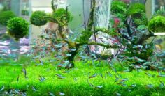 Aquarium Cleaning Made Clear | Pet Age