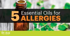 Natural Remedies For Allergies People who suffer from allergies can't always avoid triggers, but certain powerful essential oils can treat allergy symptoms and boost our immune systems. Fall Allergies, Pollen Allergies, Seasonal Allergies, Essential Oils For Colds, Essential Oil Uses, Young Living Essential Oils, Natural Remedies For Allergies, Allergy Remedies, Leiden