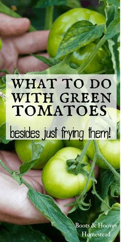 to do with Green Tomatoes What to do with green tomatoes? Recipes and uses for green tomatoes that aren't just frying them up!What to do with green tomatoes? Recipes and uses for green tomatoes that aren't just frying them up! Green Tomato Salsa, Green Tomato Recipes, Vegetable Recipes, Veggie Food, Fried Green Tomatoes Recipe Healthy, Spinach Recipes, Avocado Recipes, Pork Recipes, Bread Recipes