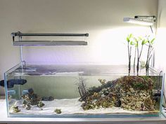 natural 40 gnano reef aquarium recreates a shallow coastal mangrove and macro algae biotope, compl. Aquarium Setup, Diy Aquarium, Aquarium Design, Marine Aquarium, Aquarium Fish Tank, Planted Aquarium, Saltwater Fish Tanks, Saltwater Aquarium, Freshwater Aquarium