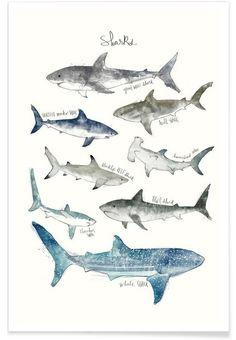 Sharks en Affiche premium par Amy Hamilton | JUNIQE