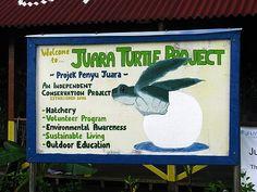Turtle sanctuary, Bentota, Sri Lanka