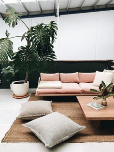 A minimal living room with a low, deep sofa, floor cushions and Pampa rug. With a large potted plant accent.