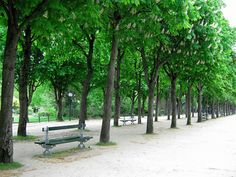 Along the Champs Elysees in Paris