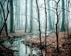 Winding Creek aqua blue grey fog nature trees by joystclaire.jpg
