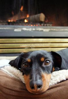 crusoe / The summer is for sun bathing and the winter is for fireplace lazing.