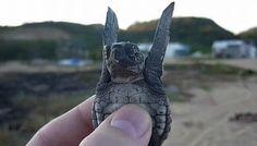 Sie haben Träume. | 24 Bilder, nach denen Du sofort eine Schildkröte adoptieren willst