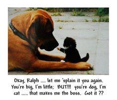 Okay Ralph
