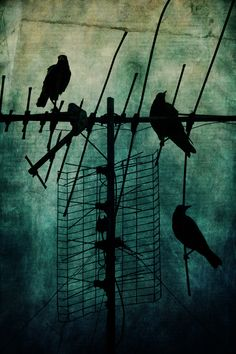 Silent Threats, Andrew Paranavitana. More teal with silhouettes