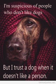 I'm suspicious of people who don't like dogs...