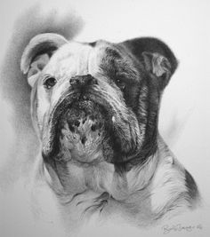 anyone with questions on a dog portrait for themselves or a friend for the holidays, email me as soon as possible at ryan@ryanjacque.com (with dog portrait in the subject line) British Bulldog, Dog Portraits, Pencil Art, Dog Art, Small Dogs, Illustration, Old Things, Horses, Puppies