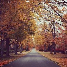 Fall in Kentucky | Louisville, Kentucky in the Fall