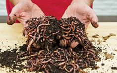 You don't need to wait until spring for good soil. Bring the pile inside and let these guys do the work.