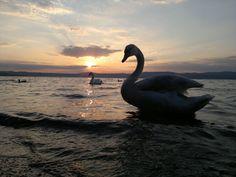Tramonto sul lago di Anquillara - Rm