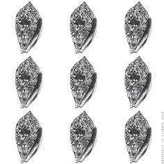 Seashells 6 Cone Snail- Pen Illustration