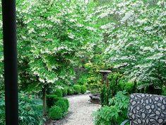 庭に植えるエゴノキ、シンボルツリーを紹介しています。