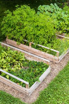 How to turn lawn into raised garden beds. Converting energy-wasting lawn into raised garden beds is smart. This no-waste way to build a vegetable garden using the lawn as fertilizer is even smarter! Garden Bed Kits, Vegetable Garden, Plants, Organic Gardening, Growing Vegetables, Large Backyard, Garden Design, Vegetable Garden Raised Beds, Garden