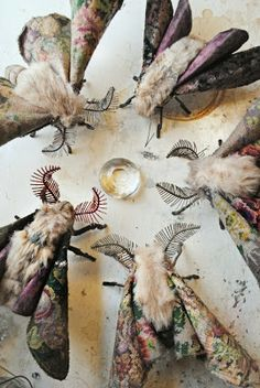 Mister Finch and a wonderful collection of Moths