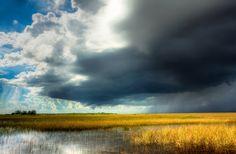 Everglades 11