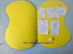 Ciclul de viata al plantei - fasolea Terraria, Eric Carle, Science, Montessori, Terrariums