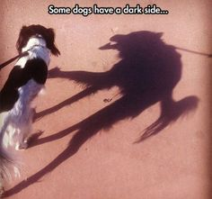 The Dark Side Of a Dog
