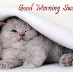 """Mi piace"": 17, commenti: 1 - Gibson Paul 🗽 (@gibsonpaul424) su Instagram Good Morning Cat, Cats, Funny, Animals, Instagram, Pictures, Photos, Gatos, Animales"