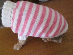 comment tricoter un habit pour chien                                                                                                                                                                                 Plus Diy Storage Ottoman Bench, Matisse Dog, Crochet Cat Pattern, Dog Clothes Patterns, Dog Wear, Dog Sweaters, Pet Clothes, Yorkshire Terrier, Knitting Patterns Free