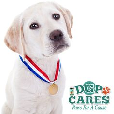 DGP Cares Paws for a Cause 2016 Winners have been announced!