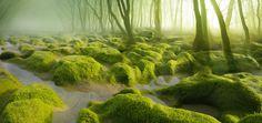 mocsár erdő maros megye