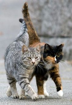 Two Cats… Copyright: Seiji. °  Thick as thieves...