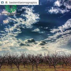 #Repost @bestemiliaromagnapics with @repostapp.  COMPLIMENTI a @michyzen per questo bellissimo scatto dalla provincia di Ferrara!  scelta da @isola_fenice (ADMIN) FOUNDER: @mariettorc LOCALITÀ: Ferrara  CATEGORIA: #nature  #emiliaromagna #italia #italy #turismo #travel #travelgram #instatravel #travelphotography #mytravelgram #whatitalyis #instabeauty #turismoer #turismo #bestitaliapics #visitemiliaromagna #italiainunoscatto #italia365 #igersitalia #igersemiliaromagna #italia_places…