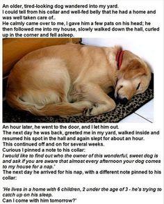 A dog's story :-)