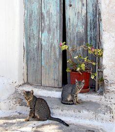 Cats posing in Paros © Victor Castillo