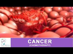 Cancer dies when you eat these 5 foods time to start eating them ! 5 Anti Cancer Foods - YouTube