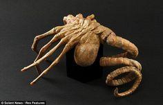 Eles existem: Fóssil de 300 milhões de anos foi usado como inspiração para o filme de terror ''Alien'' - Sempre Questione