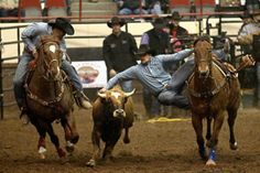 Cooper Shofner leaps from his horse during the steer wrestling event at the ninth event of the 2014 San Angelo Stock Show and Rodeo.