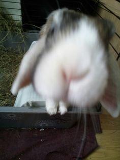 My little cute bunny 😁😇😄😉😝😋😘