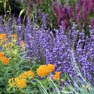 Great gardening ideas and plant combinations  http://blog.highcountrygardens.com/archives/742
